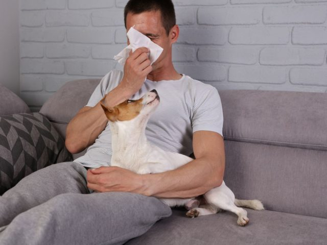 Alergia na roztocza – jak sobie z nią radzić?
